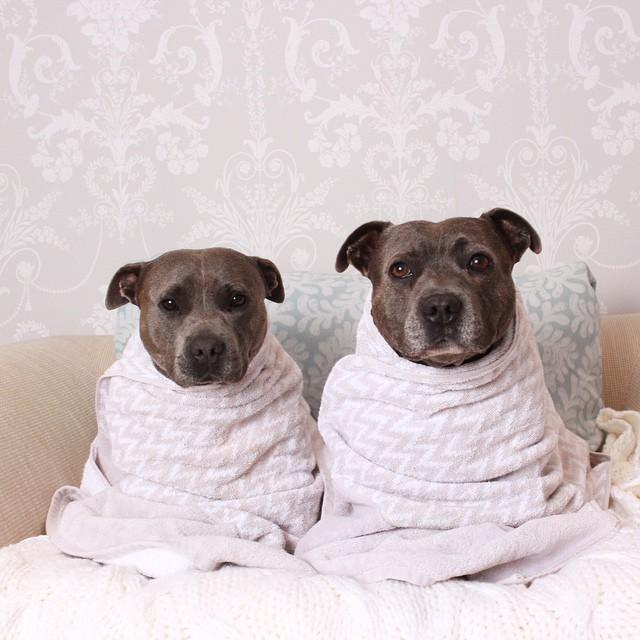 perros 3
