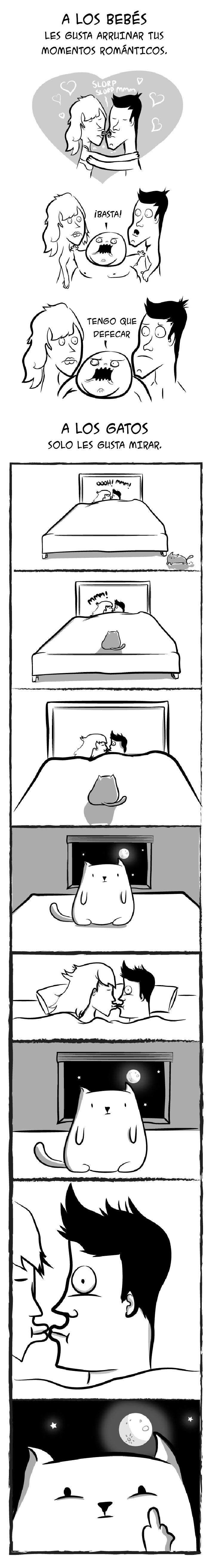 bebes gatos 6