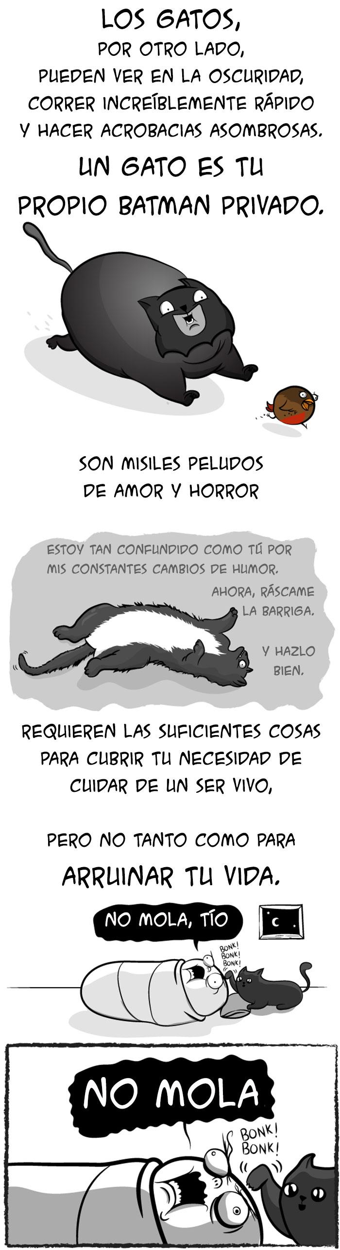 bebes gatos 8