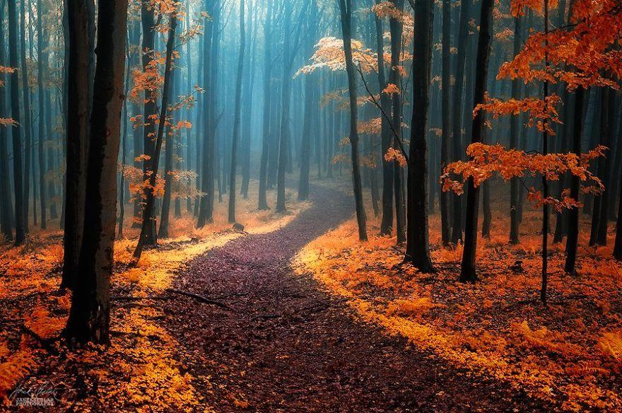 bosques de pelicula 1