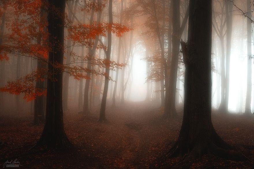 bosques de pelicula 10