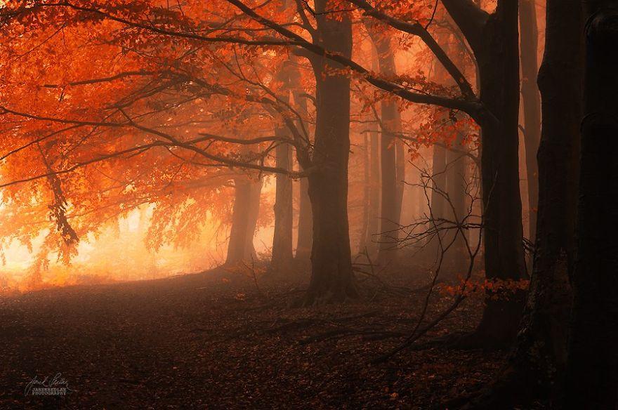 bosques de pelicula 12