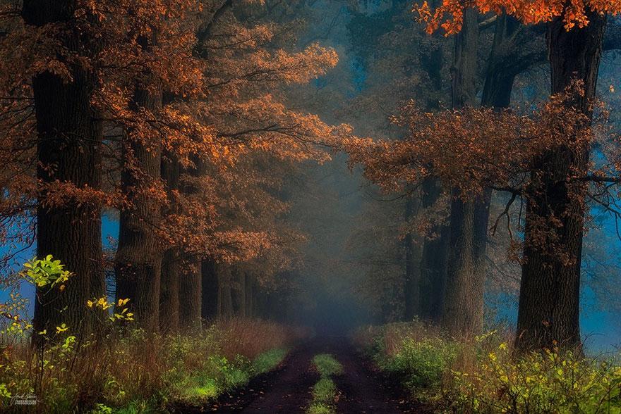 bosques de pelicula 13