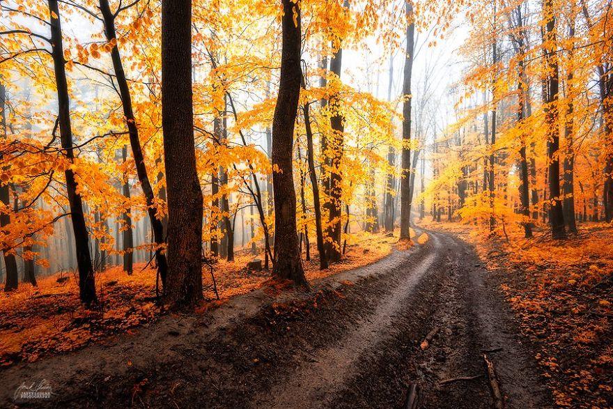 bosques de pelicula 14
