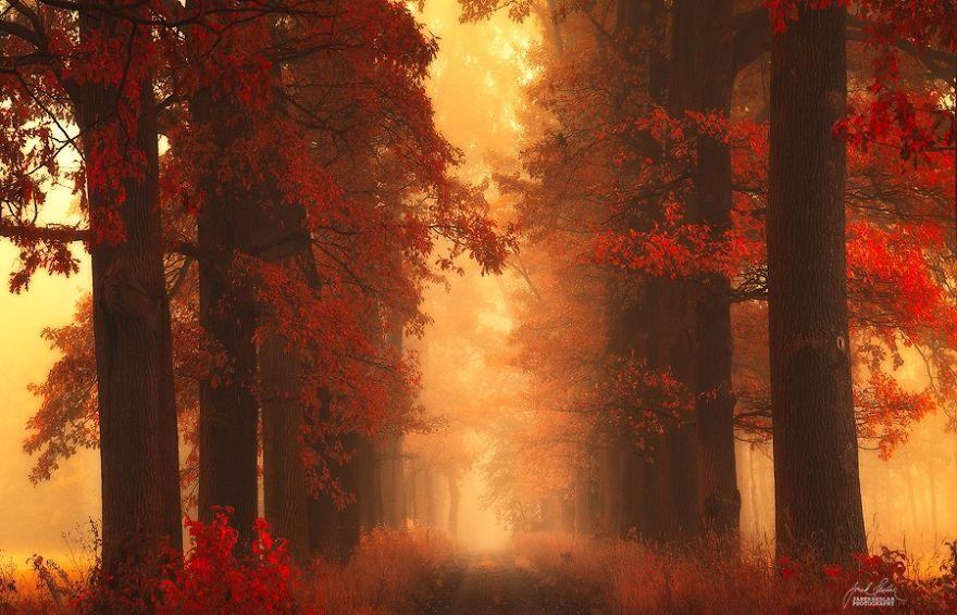 bosques de pelicula 16