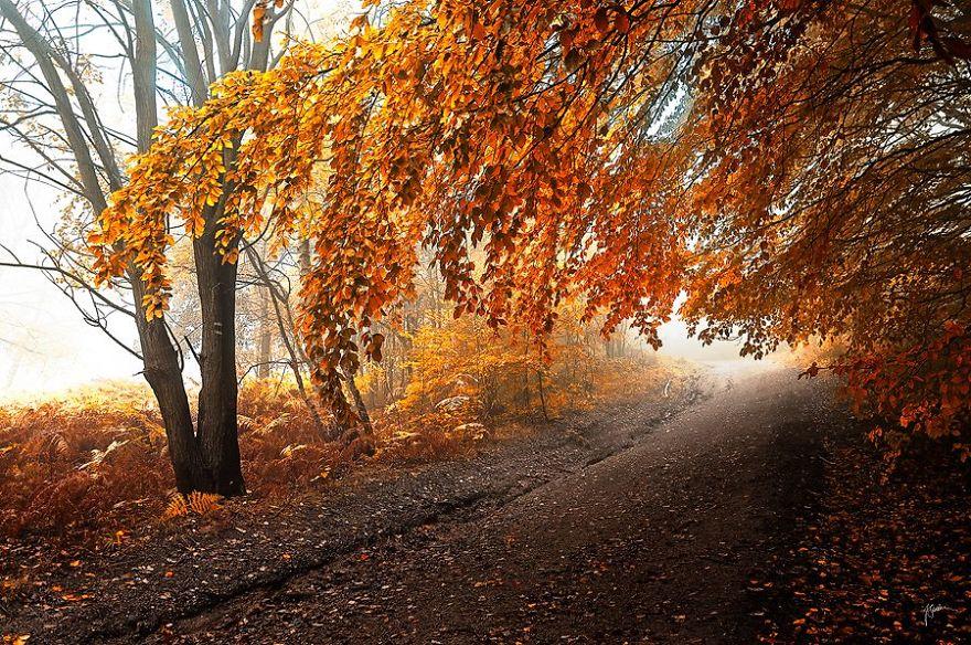 bosques de pelicula 18