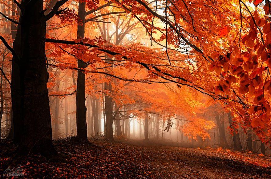 bosques de pelicula 2
