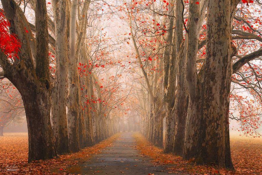 bosques de pelicula 3