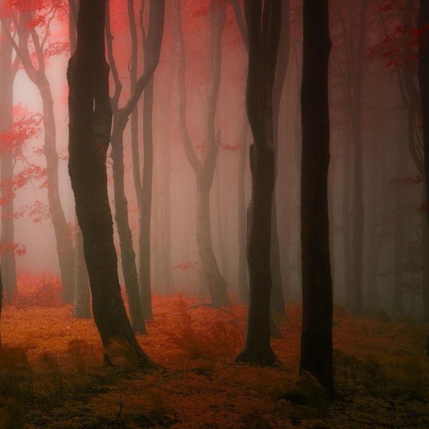 bosques de pelicula 4