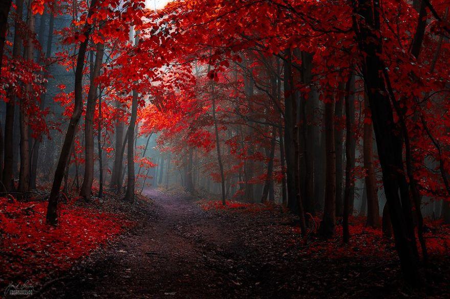 bosques de pelicula 5