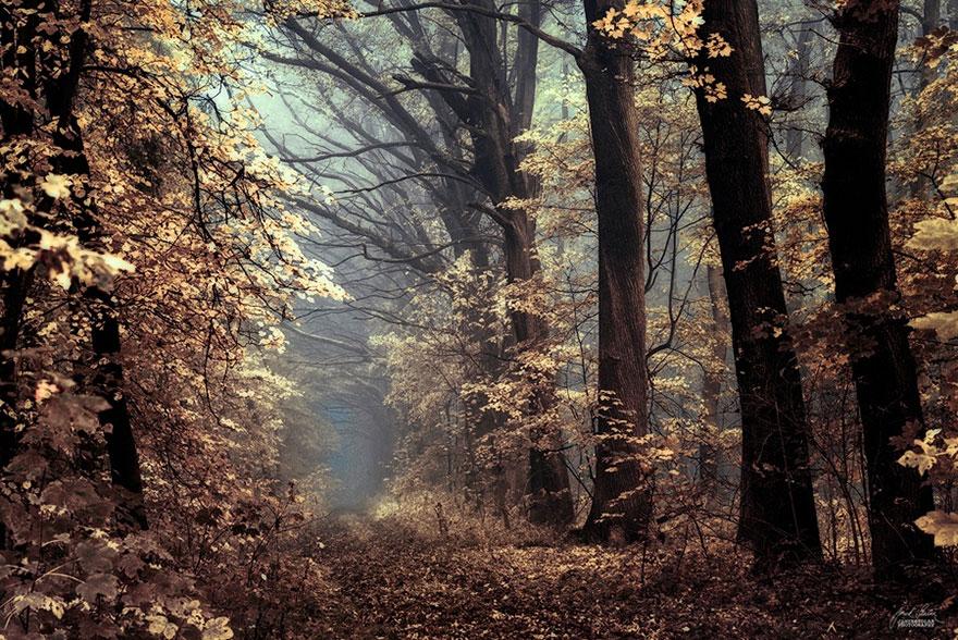 bosques de pelicula 8