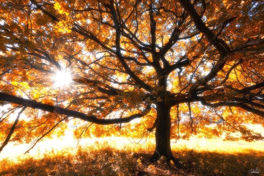 bosques de pelicula 9