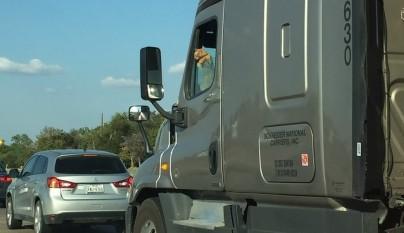 gato camionero