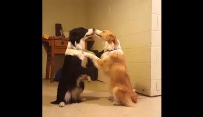 perros beso