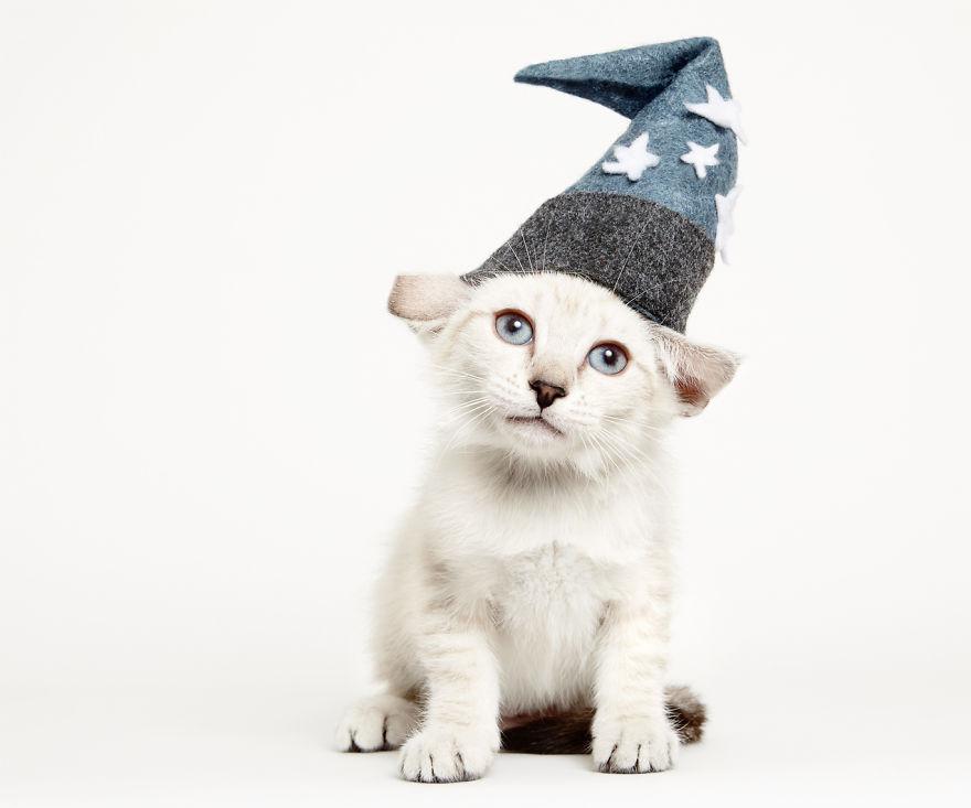gatos que buscan un hogar 3