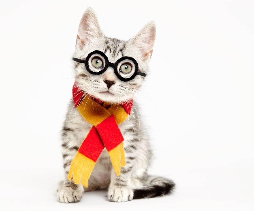 gatos que buscan un hogar 4