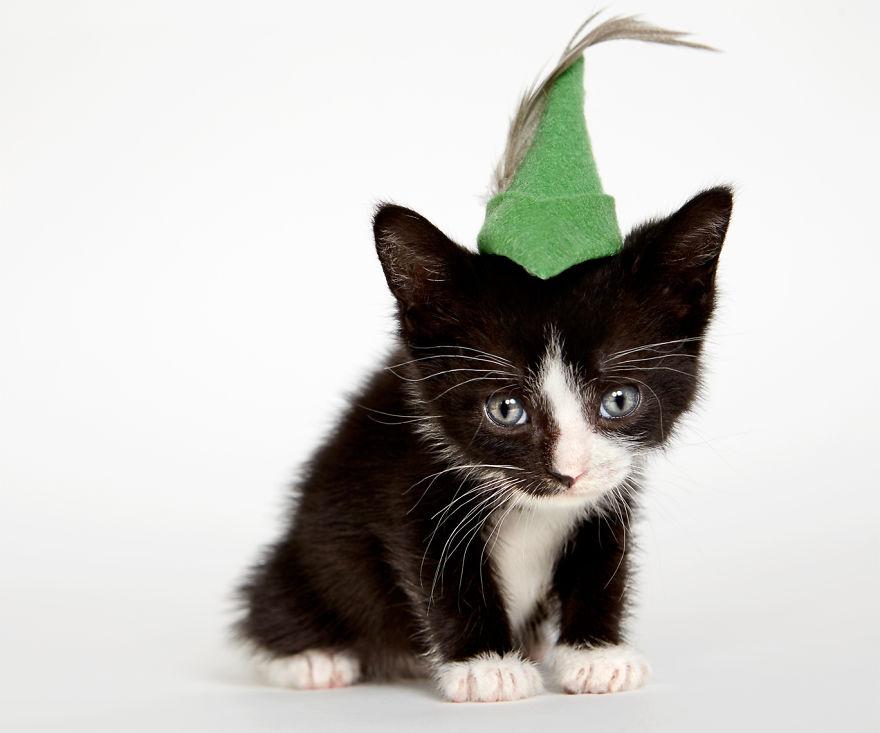 gatos que buscan un hogar 5