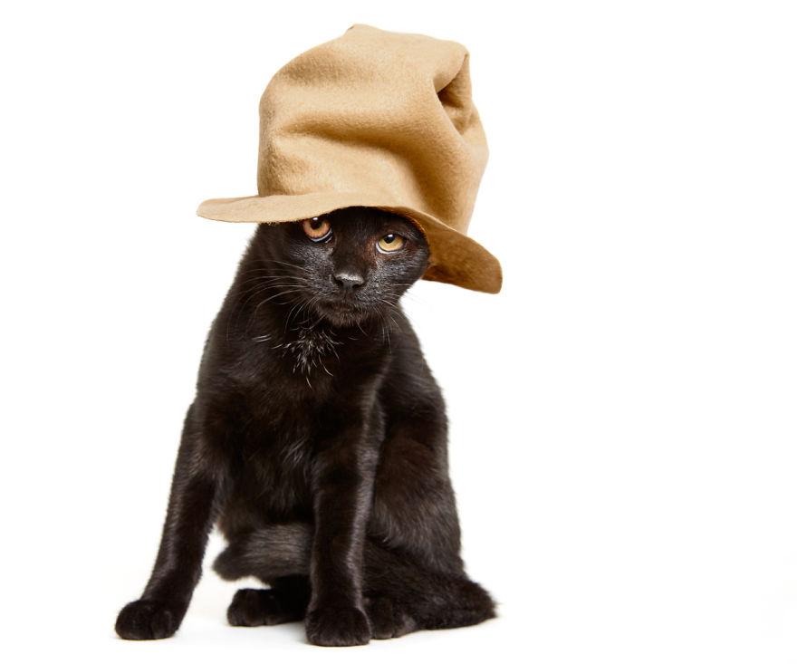 gatos que buscan un hogar 6