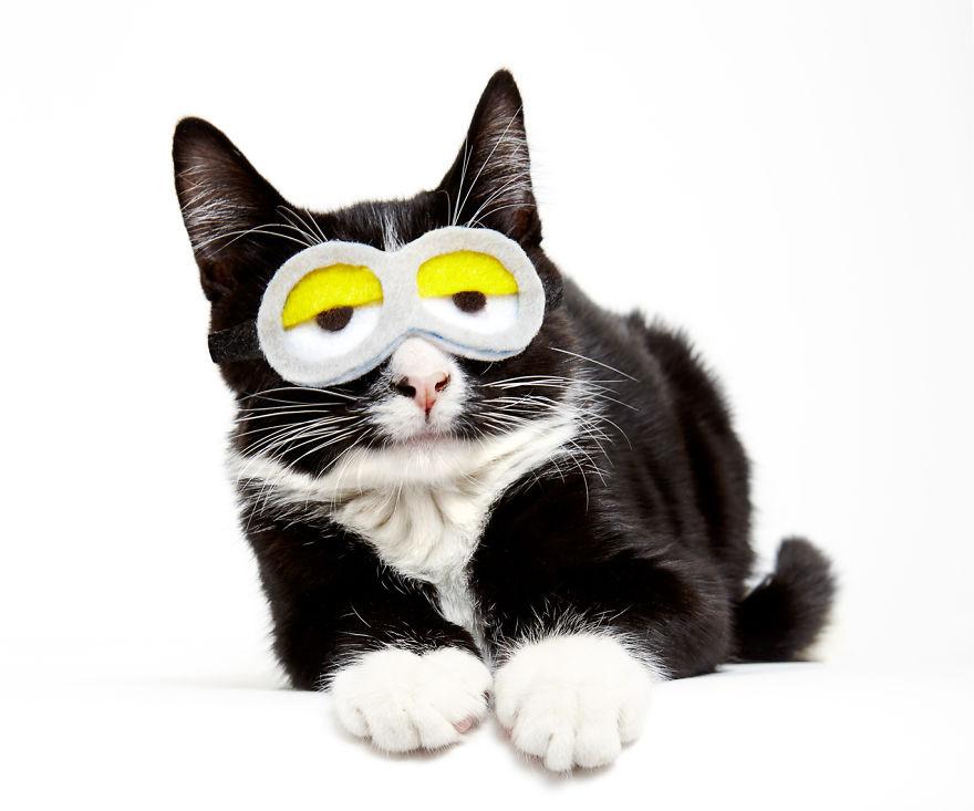 gatos que buscan un hogar 7