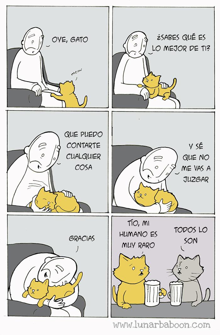 la vida con un gato 1