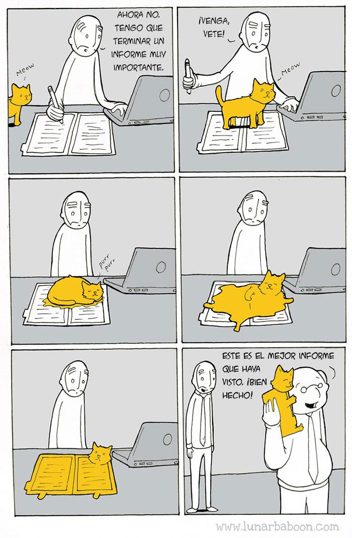 la vida con un gato 6