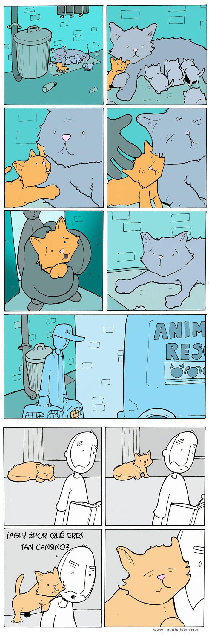 la vida con un gato 9