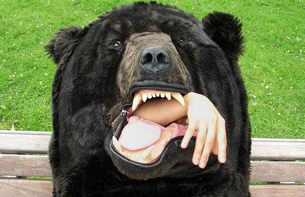 oso dormir 5