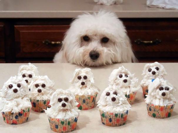 cupcakes perrito