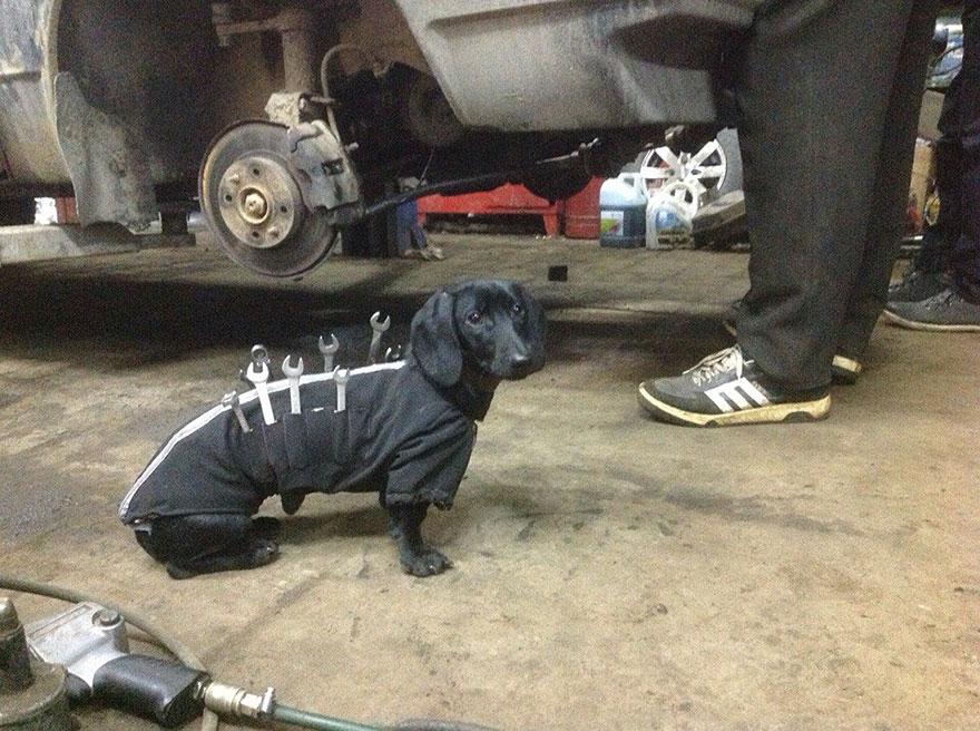 el perro que todo mecanico querria tener 4