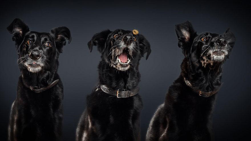 perros comida al vuelo 10