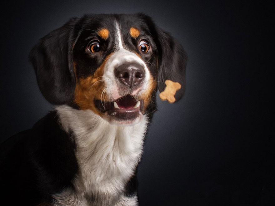 perros comida al vuelo 5