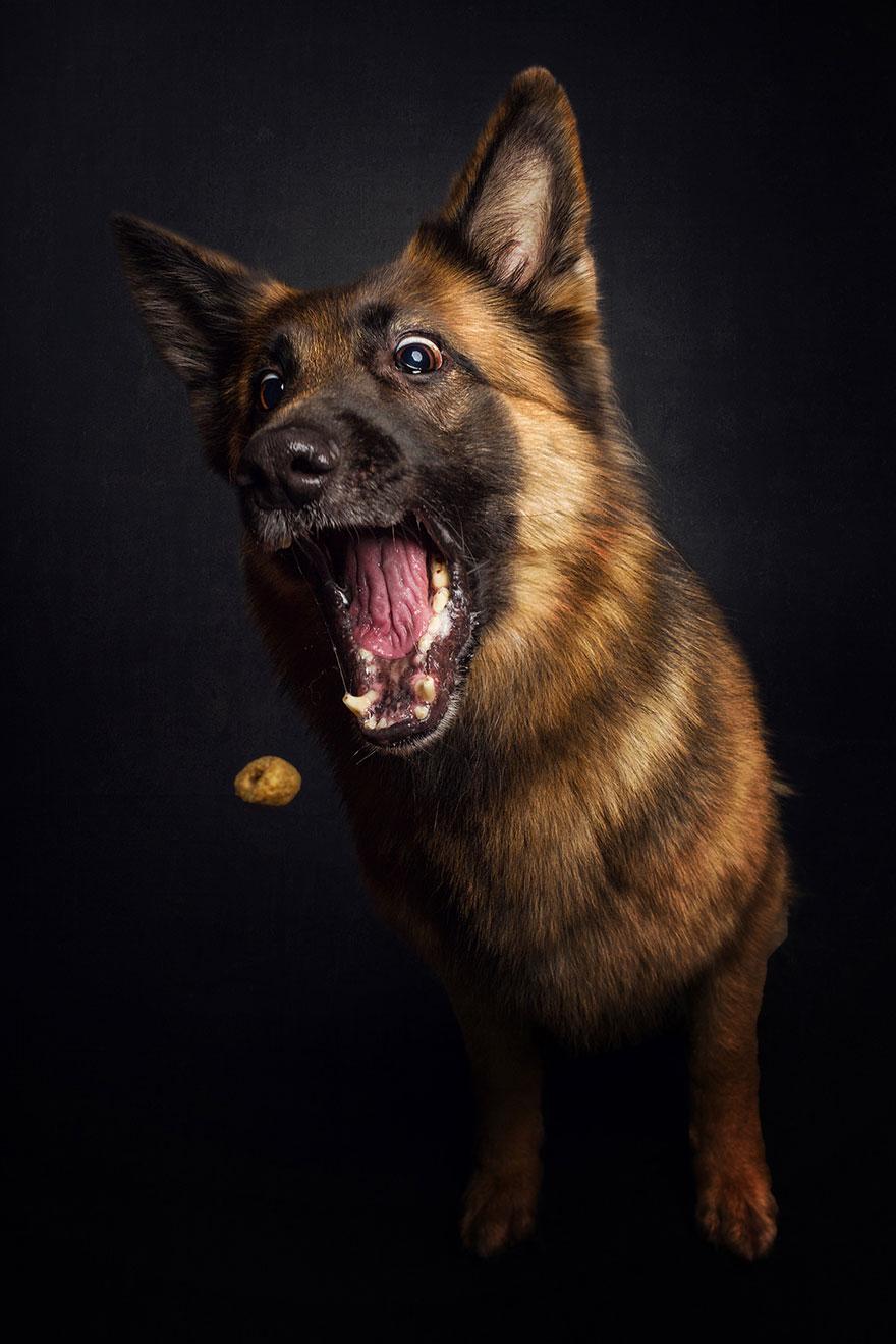 perros comida al vuelo 7