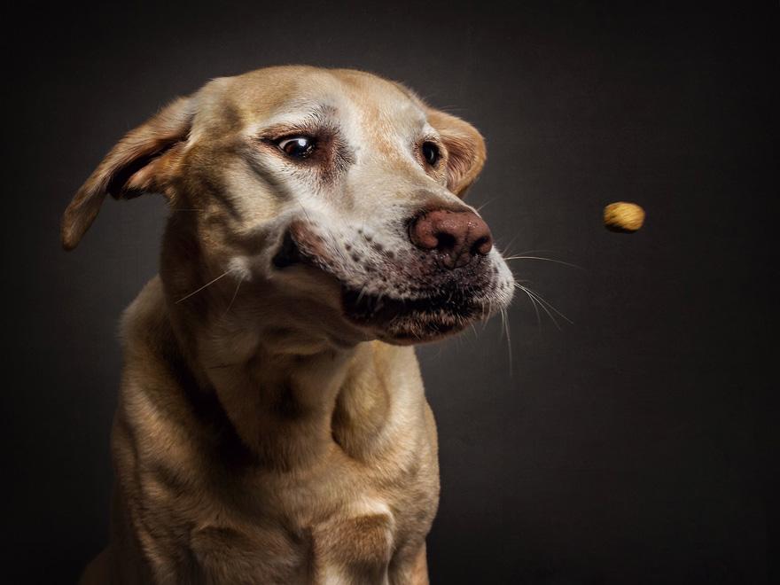 perros comida al vuelo 9