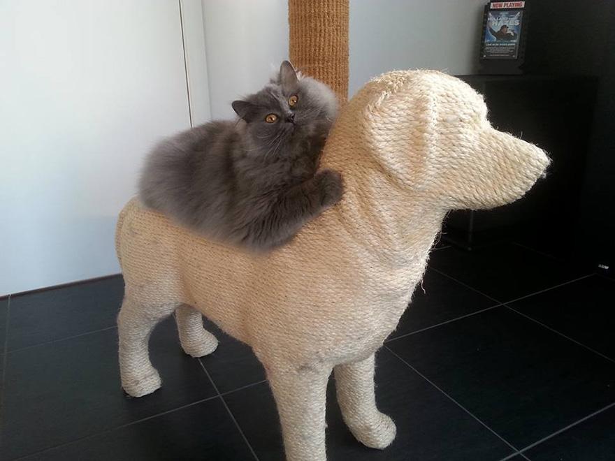 rascador forma de perro 3
