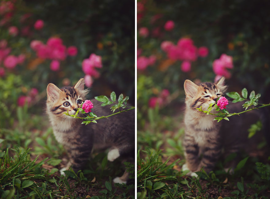 animales oliendo flores 1