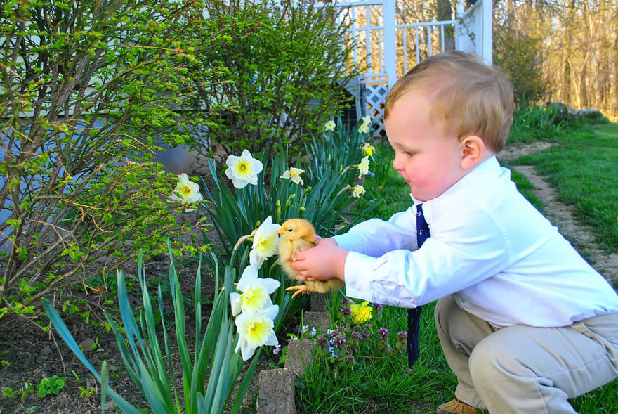 animales oliendo flores 10