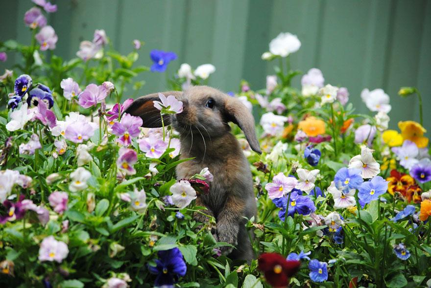 animales oliendo flores 2