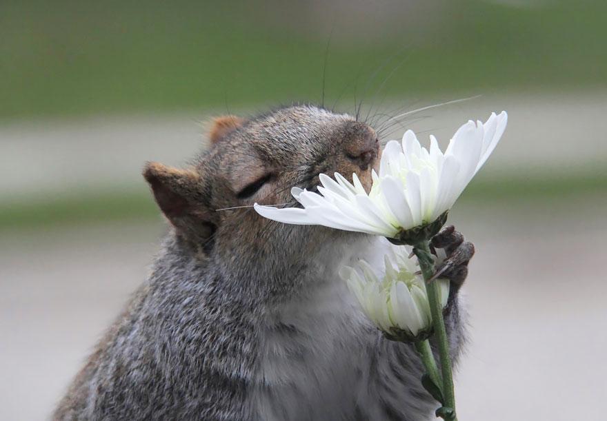 animales oliendo flores 4