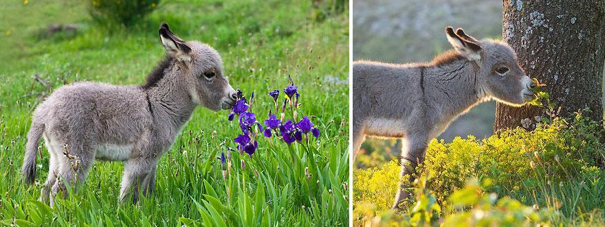 animales oliendo flores 5