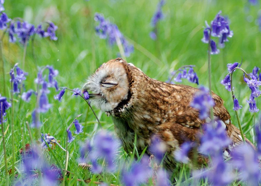 animales oliendo flores 9