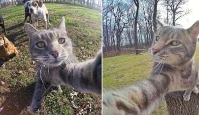 el gato que se hace selfies 1