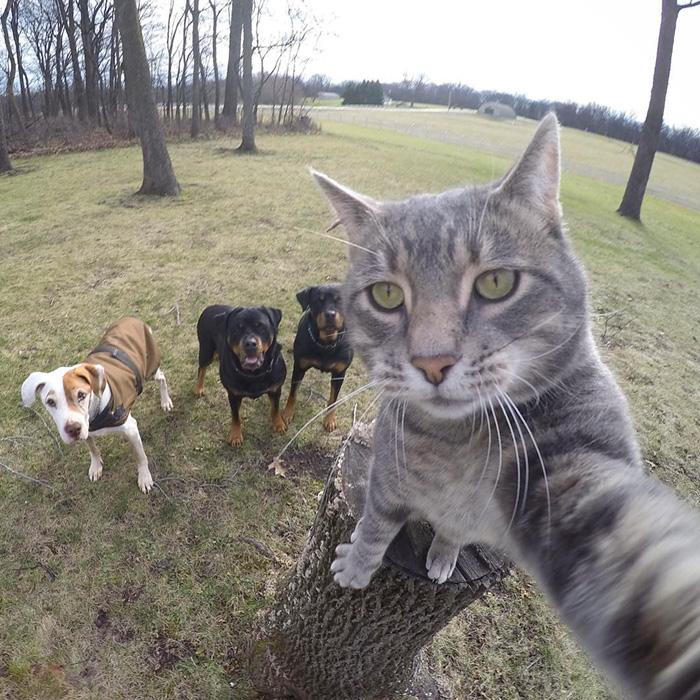 el gato que se hace selfies 3