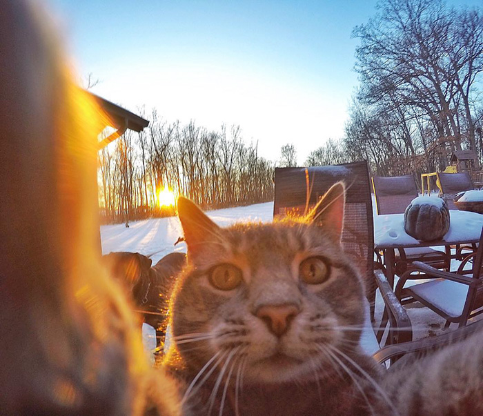 el gato que se hace selfies 4