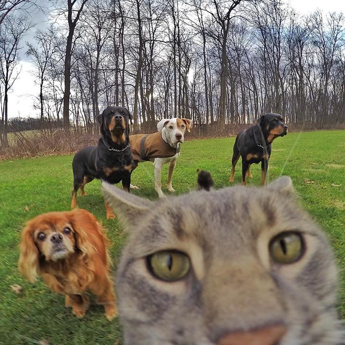el gato que se hace selfies 5