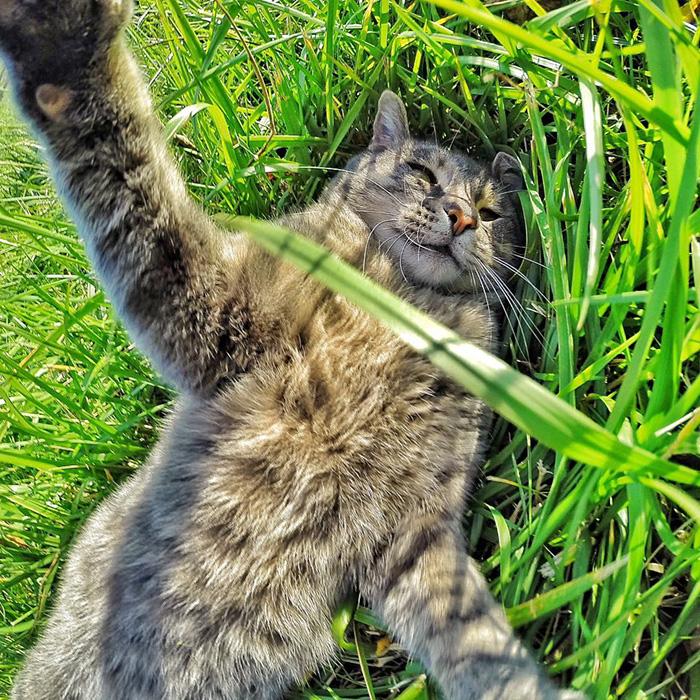 el gato que se hace selfies 8