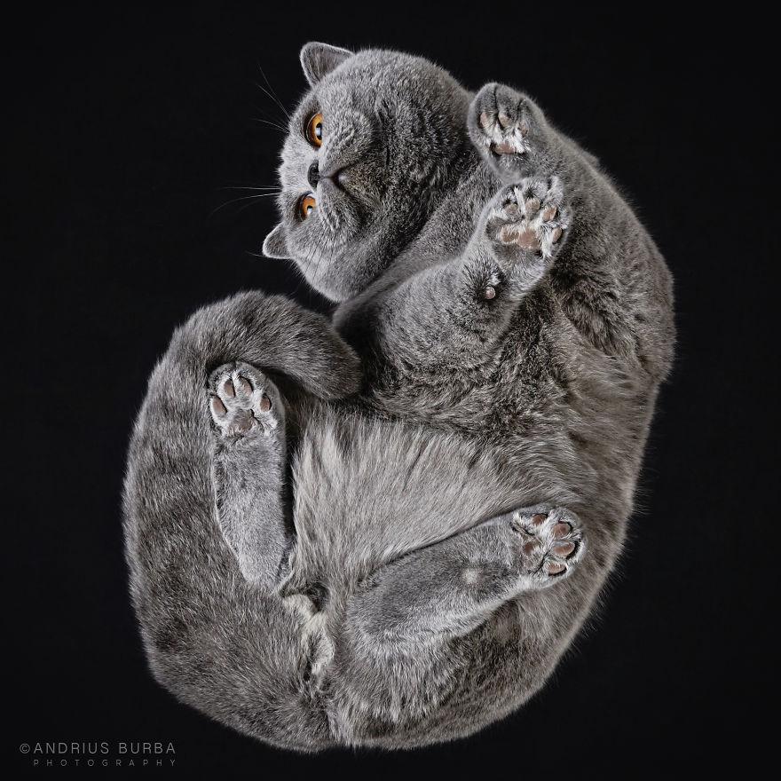 fotos de gatos desde abajo 1