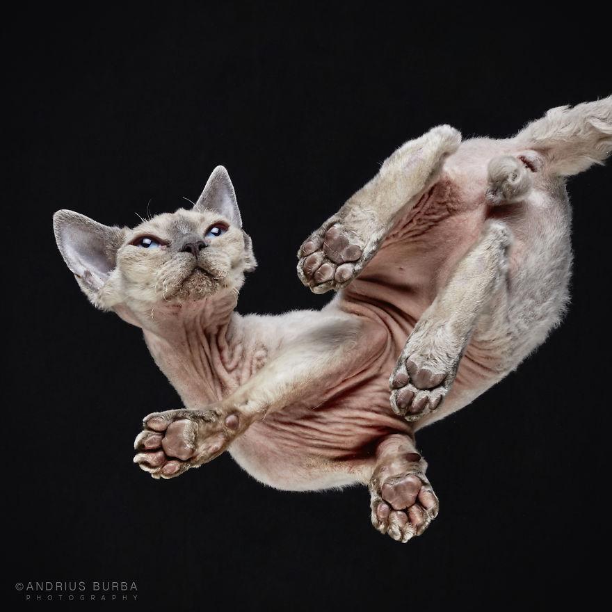 fotos de gatos desde abajo 10