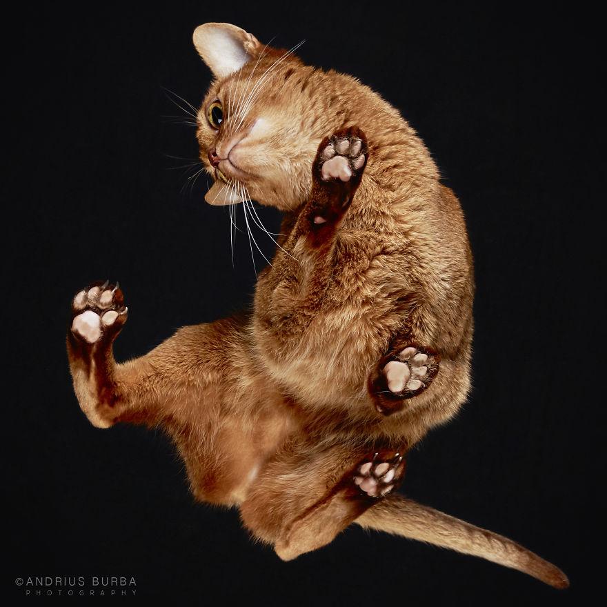 fotos de gatos desde abajo 12