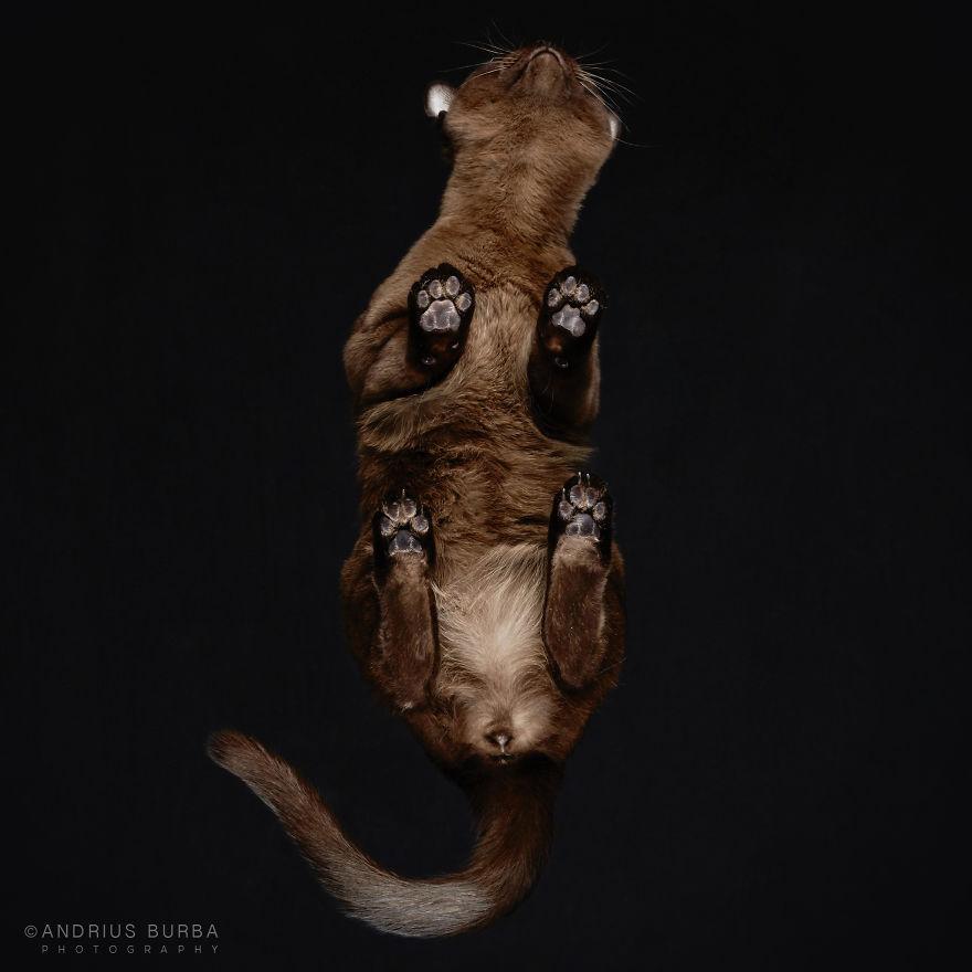 fotos de gatos desde abajo 13