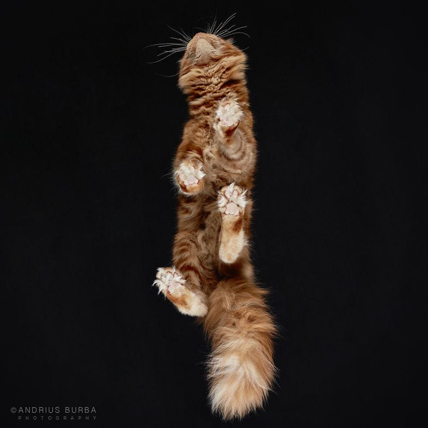 fotos de gatos desde abajo 14